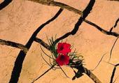 Puzzle Fleurs dans le desert