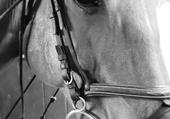 Puzzle magnifique cheval