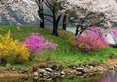Puzzle Un paysage frais et fleuri