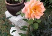 Puzzle Mon jardin bonheur