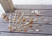 Puzzle Coquillages des Maldives