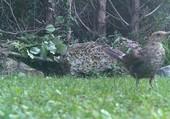 Puzzle oiseaux dans le jardin