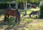 Puzzle en campagne, cheval, âne
