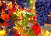 Puzzle Raisins d'automne
